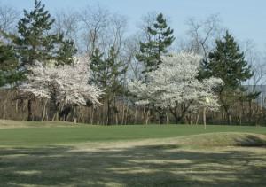 H284月桜 中コース5番
